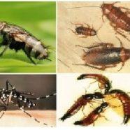 Sekilas Tentang Pest