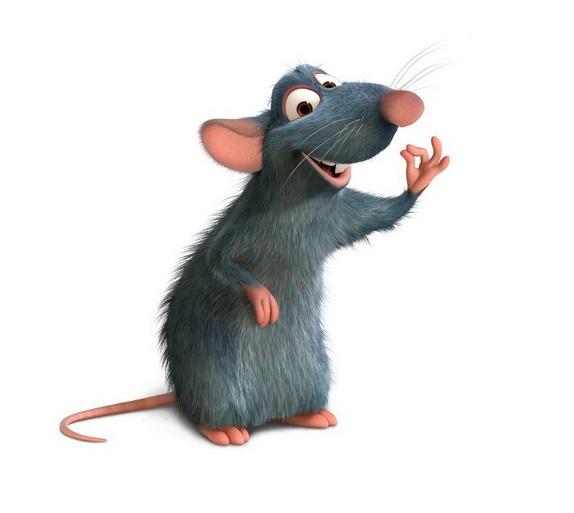 Tikus